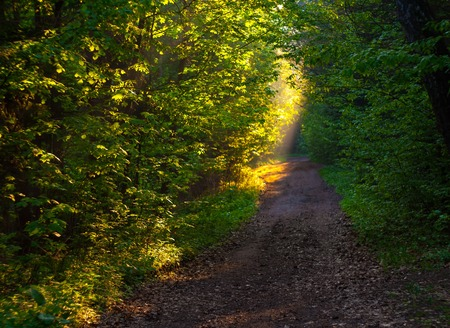 Beautiful path in forest in morning light, polish landscape photo