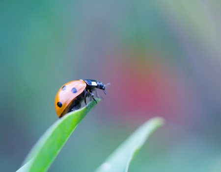 Beautiful close up of ladybug walking on plant photo