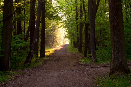 Beautiful path in forest in morning light photo