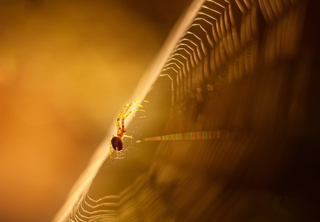 Spider photographed sitting and hunting on his web in nice light photo