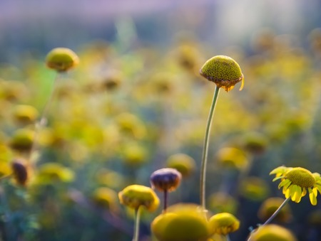 carpels: Flowers without petals in sunset light