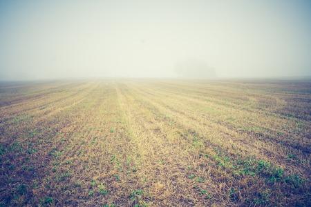 stubble field: Stubble field, early autumnal landscape. Photo with vintage mood effect