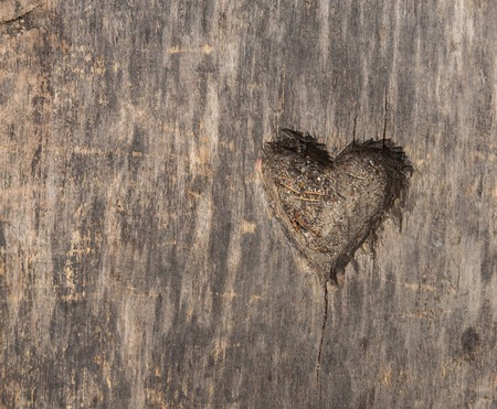 bark carving: Small heart shape cut in old wood. Picture useful as background Stock Photo