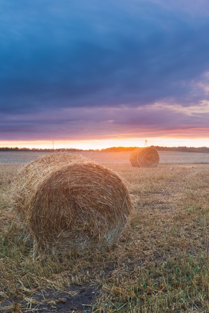 hayroll: straw bales on field after harvest at sunset