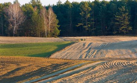campagne rural: Labour�es et ensemenc�es landscpe champ photographi� en Pologne au d�but du printemps. Belle campagne rurale au coucher du soleil d'une lumi�re dor�e Banque d'images