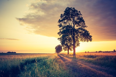Beautiful sunset over trees. Photo with vintage mood effect. photo