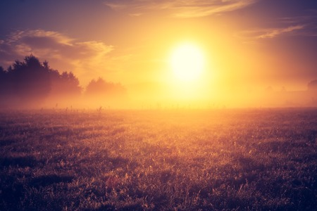 Beautiful morning landscape of meadow with fog. Photo with vintage mood effect photo