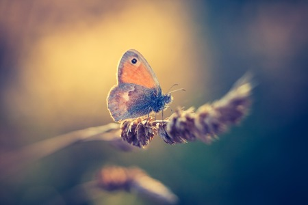 giant sunflower: Beautiful butterfly sitting on grass close up. Photo with vintage mood effect