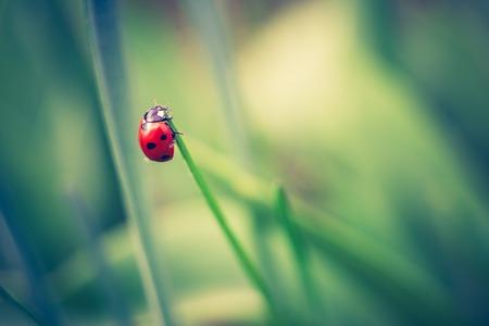 Springtime ladybug on green plants. Beautiful photo witch vintage mood.
