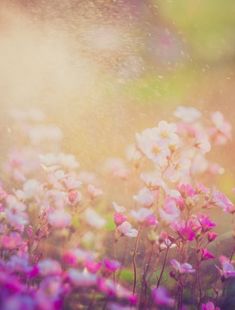 Mooie kleine bloemen groeien in de tuin, gefotografeerd in zonsondergang licht. Foto met uitstekende stemming. Stockfoto