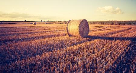 paisaje rural: Hermoso paisaje de campo con fardos de paja despu�s de la cosecha. Foto con el estado de �nimo de la vendimia. Fotografiado en Polonia. Foto de archivo