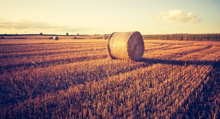 Beautiful field landscape with straw bales after harvest. Photo with vintage mood. Photographed in Poland. Standard-Bild