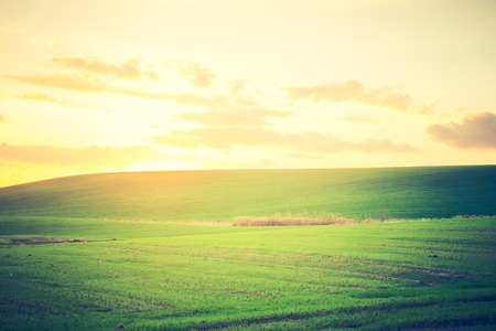 Beautiful young green field in autumn. Photo with vintage mood.
