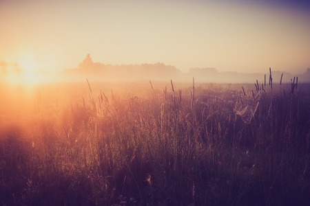 morning nature: Beautiful photo of rural foggy meadow landscape photographed at sunrise. Landscape with vintage mood usefull as background.