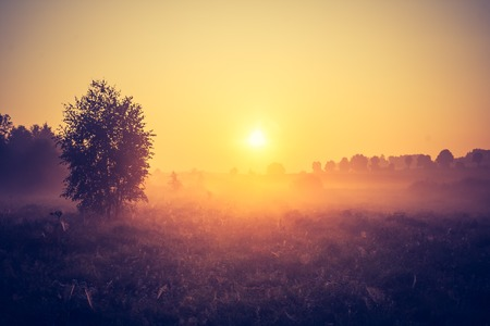 Beautiful photo of rural foggy meadow landscape photographed at sunrise. Landscape with vintage mood usefull as background. photo