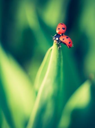 ladybird: Springtime ladybug on green plants. Beautiful photo witch vintage mood.