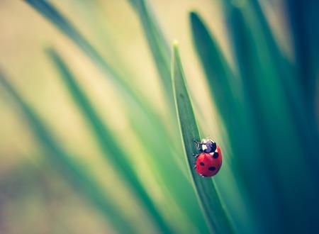 Springtime ladybug on green plants. Beautiful photo witch vintage mood. photo