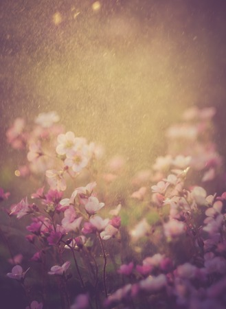 lomography: Beautiful small flowers growing in garden, photographed in sunset light. Photo with vintage mood.