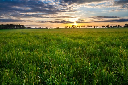 Beautiful early summertime landscape with sunset over green field photo