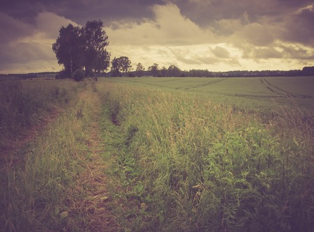 Beautiful countryside landscape. Vintage photo of corn field at summer. photo