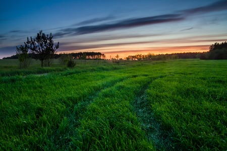 Beautiful early summertime landscape with sunset over green field 版權商用圖片