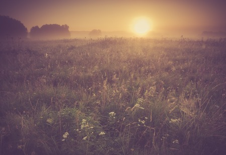 Beautiful photo of rural foggy meadow landscape photographed at sunrise. Landscape with vintage mood usefull as background.