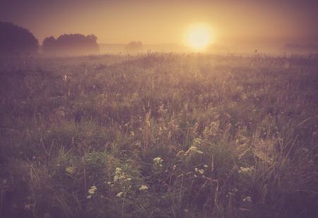 Mooie foto van landelijk mistig weidelandschap dat bij zonsopgang wordt gefotografeerd. Landschap met vintage stemming nuttig als achtergrond. Stockfoto