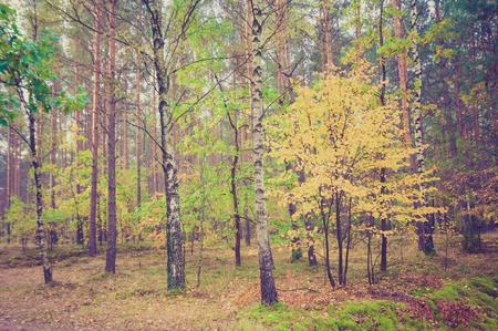 scarry: Beautiful polish forest landscape. Photo with vintage mood effect.