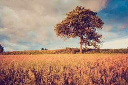 Beautiful countryside landscape. Vintage photo of corn field at summer.
