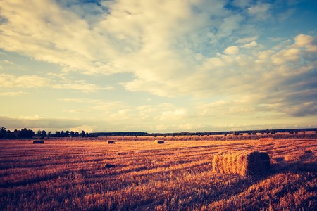 Vintage photo of straw bales on stubble field. After harvest landscape with old photo mood. photo