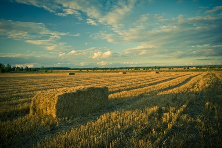 stubble: Beautiful stubble field photographed at sunny afternoon. Photo with vintage filter effect.
