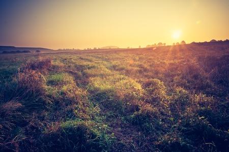 Mooie foto van het platteland mistig weiland landschap gefotografeerd bij zonsopkomst. Landschap met vintage stemming nuttig als achtergrond.