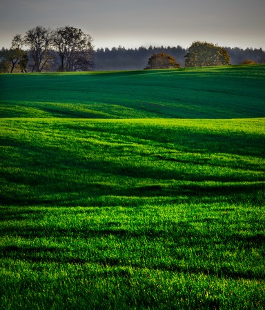 Beautiful morning landscape of sunset over young green cereal field photographed in springtime. Calm rural landscape of polish fields. photo