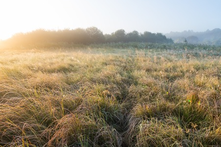 dewdrops: Beautiful sunrise over foggy meaodw. Tranquil landscape photographed on typical polish countryside. Grass and plants with dewdrops produce fog and haze under warm sunlight. Summer landscape. photographed with full frame camera and wide angle lens.