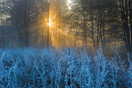 Beautiful landscape with autumnal frost at sunrise. Frozen plants on wild meadow and warm sunlight at cold morning. First signs of winter. photo