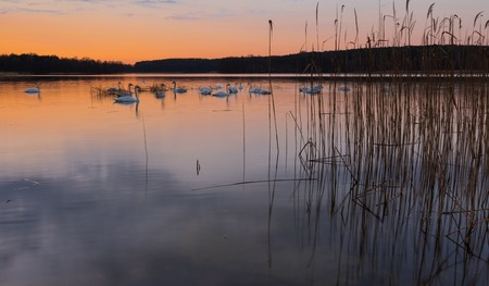 Beautiful lake after sunset with sky reflected in water. Polish lake landscape photographed in Mazury lake district. Place where swans sleeping. photo