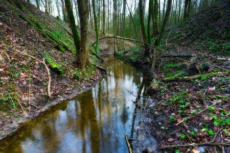 Forest wetlands. Small river in springtime forest. Beautiful green landscape photo