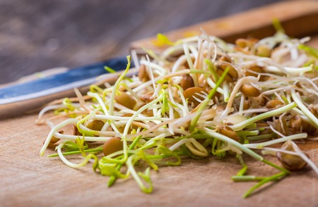 Fresh lentil and wheat sprouts on cutting board. Preparation of fresh salad. Studio shot. photo