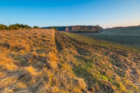 Early spring meadow with barbed wire fence at sunset. Polish landscape photo