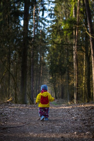 Toddler child walking by path in forest. Springtime forest landscape with small child walking alone on path.