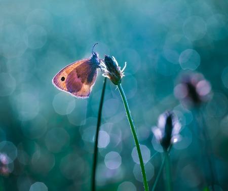 Mooie macro van de ochtend vlinder op zit op de plant op groene weide. Stockfoto