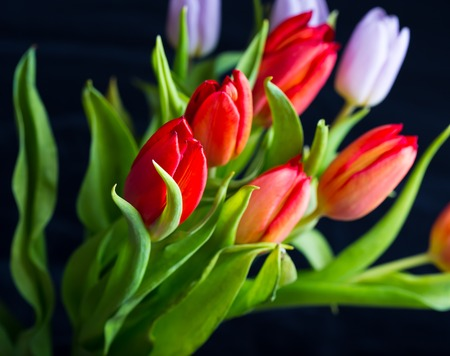 Beautiful tulips bouquet isolated on black background. Spring flowers background. photo