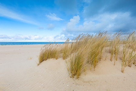 Prachtige zee kust met wild gras en oeverplanten. Oostzeekust. Stockfoto