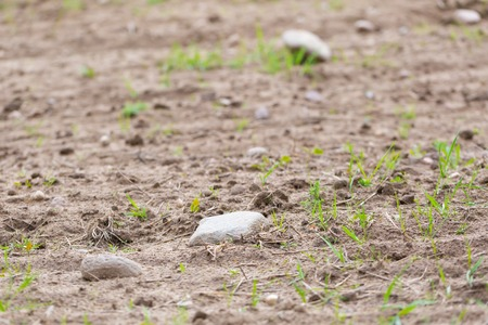 Cultivated field with rocks. close up of plowed and sown field photo