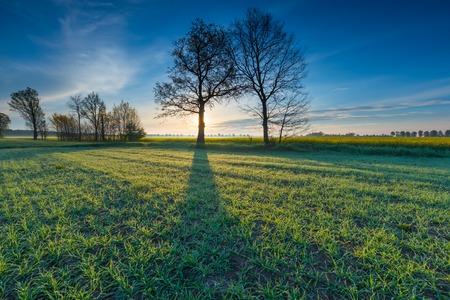 Beautiful springtime idyllic sunrise over young cereal field. Beautiful polish countryside. photo