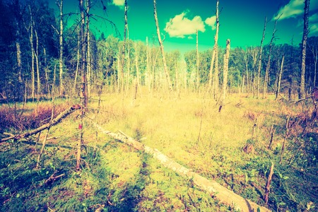 Vintage photo of wetlands at springtime. Green wetlands with dead trees trunk photographed in spring. Polish landscape. photo