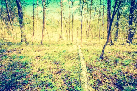 Vintage photo of beautiful green springtime forest landscape. European natural forest with fresh green young leaves. Good weather landscape.