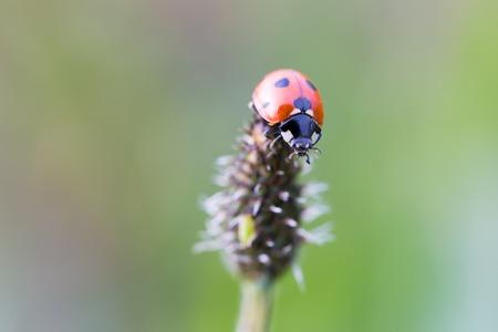 ladybug on leaf: Vintage photo of ladybug on grass