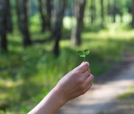 Womans hand holding clover leaf with blurred forest . photo