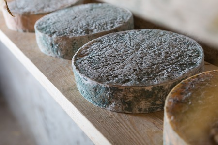 maturing: Goat cheese maturing in basement. Studio shoot with mystic light efect.